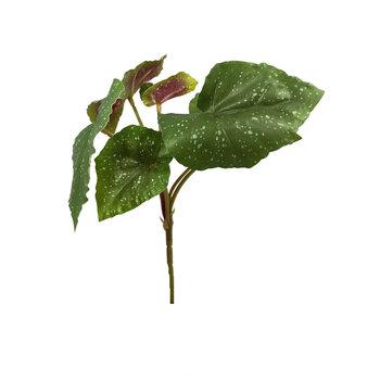 Buque de Begonia