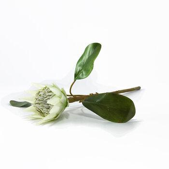 Haste de Protea Branca