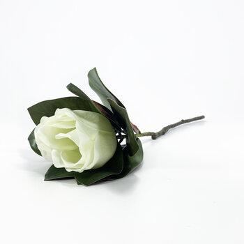 Magnolia Branca Toque Real